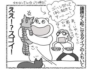 29032017_cat4.jpg