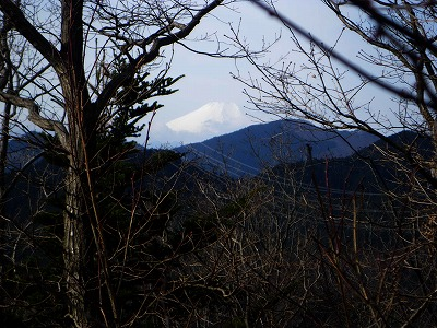 木の間に富士