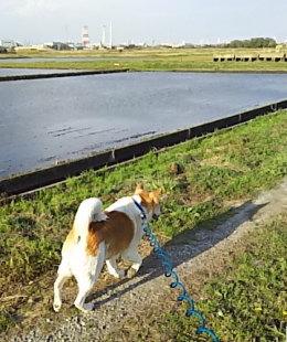 田んぼに水がひかれた