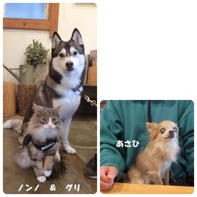 2017-4-4.jpg