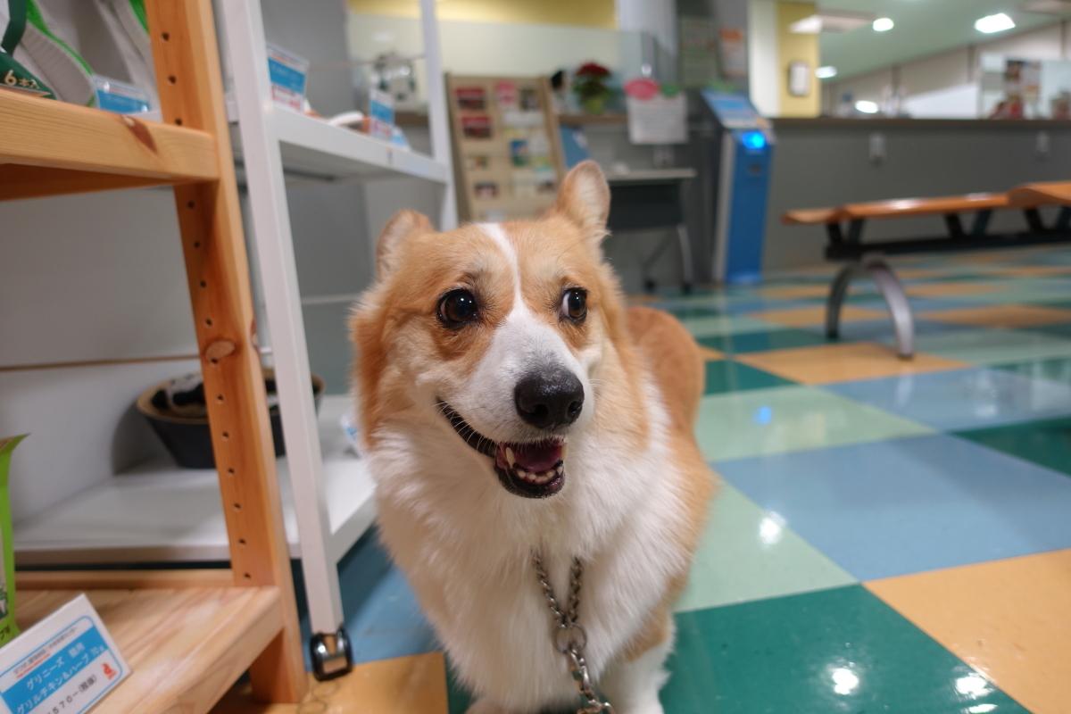 D動物病院にて1