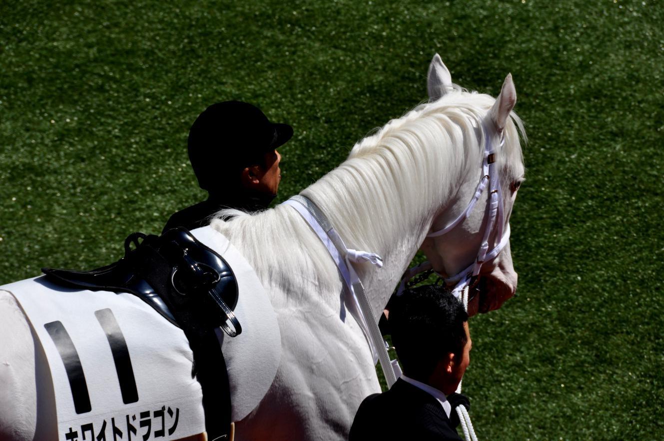 ①白馬のたてがみ