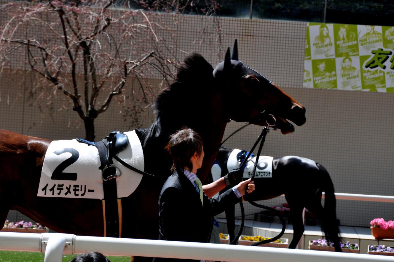 ②たてがみを立てる競走馬