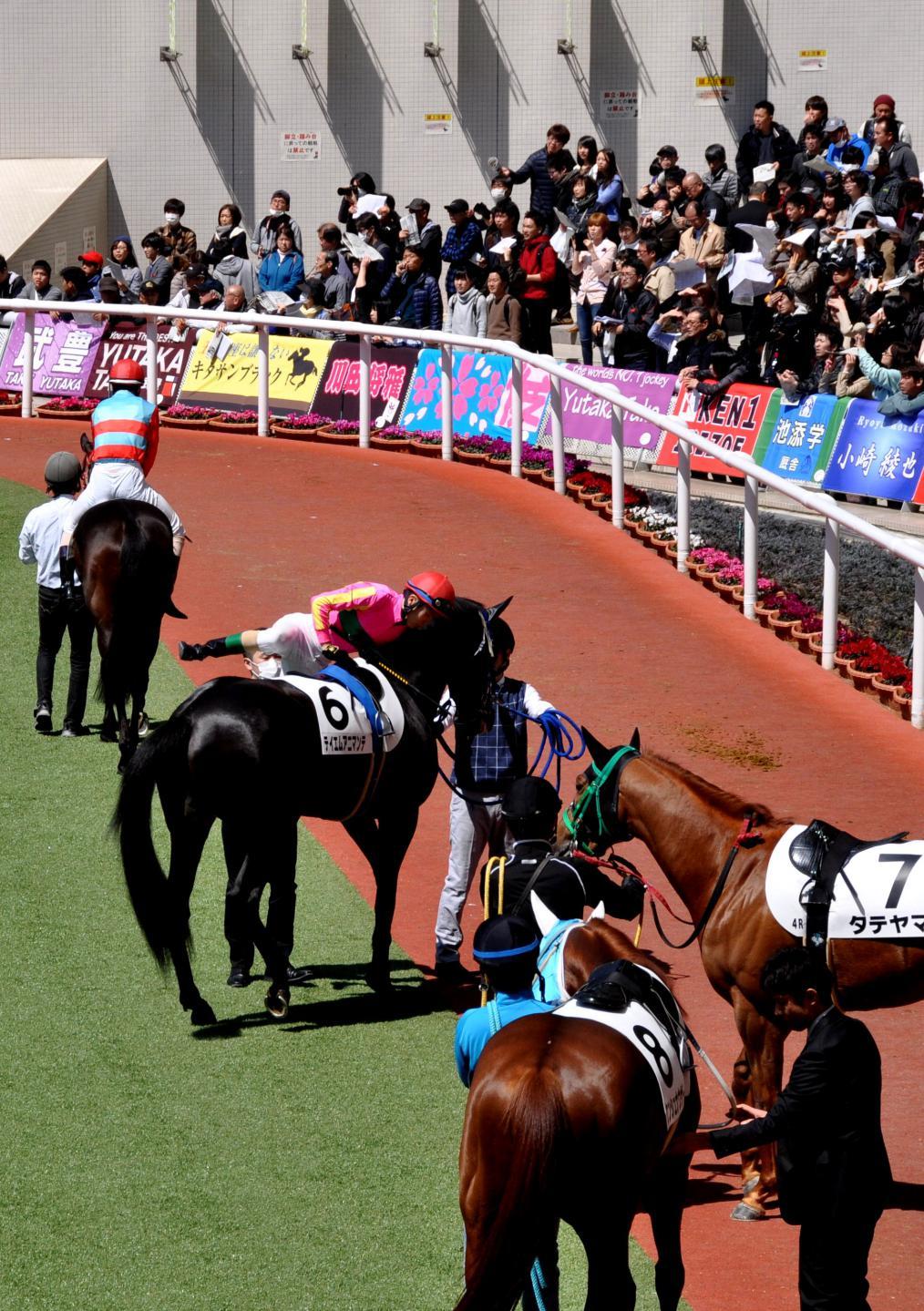 ④乗馬する騎手