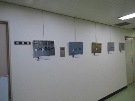 170218写真展設営完了:羽村コニュニティセンター (3) - コピー