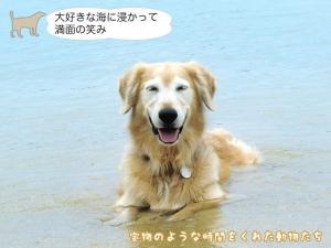 大好きな海に浸かって満面の 笑み