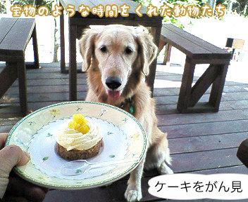 ケーキをがん見!