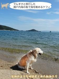 でんすけと旅行した瀬戸内海の島で海を眺めるケフィ
