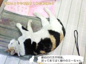 最初の行方不明後、戻って来てばく睡中の ミーちゃん