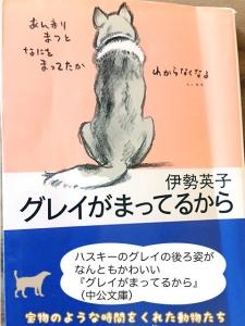 ハスキーのグレイの後ろ姿がなんともかわいい『グレイがまってるから』(中公文庫)