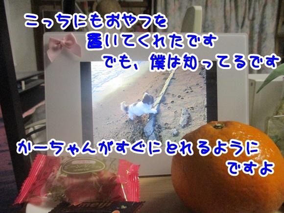 0211-10.jpg
