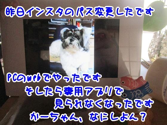 0329-09_201703291524567db.jpg