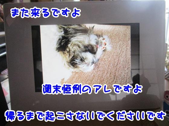 0414-10.jpg
