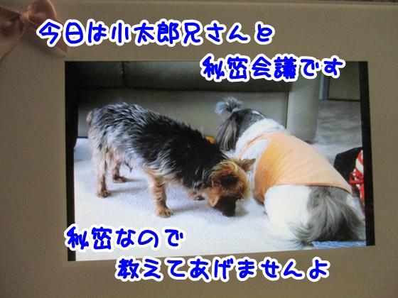 0427-09_201704271932131cf.jpg