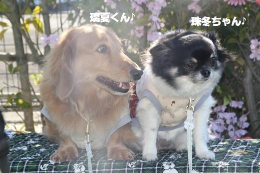 おおとう桜街道1 2017-2-19-7
