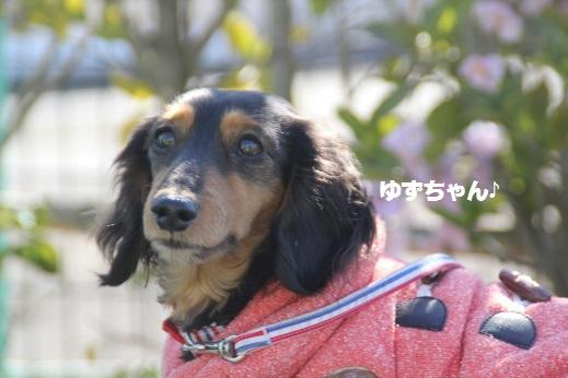 おおとう桜街道1 2017-2-19-10