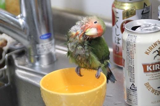 水浴びキックス その1