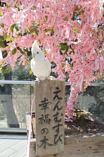竈神社 2017-3-11-3