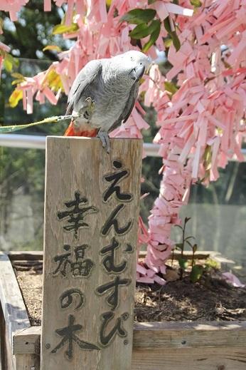 竈神社 2017-3-11-5