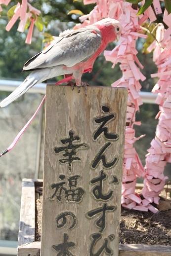 竈神社 2017-3-11-9