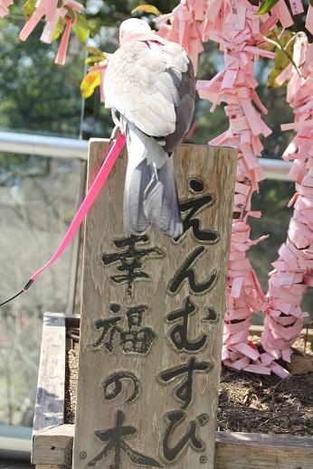 竈神社 2017-3-11-10