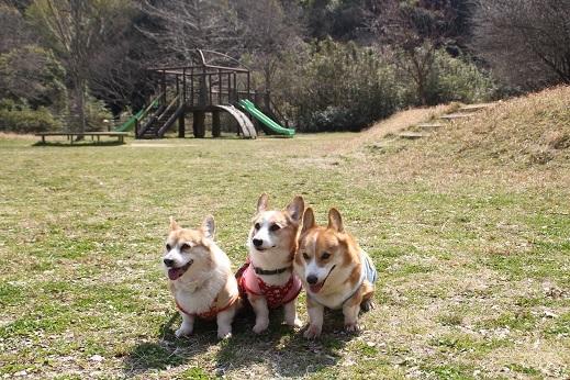 長野緑地 2017-3-19-6