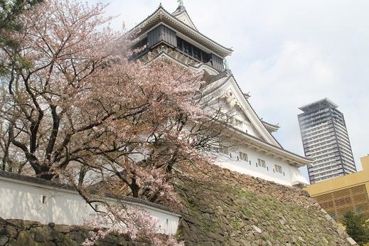 桜1 2017-4-12-5