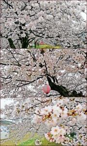 kanasaki2.jpg