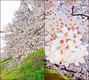 kanasaki3.jpg