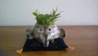 像の植木鉢