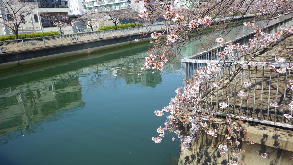 福寿橋 春の水面