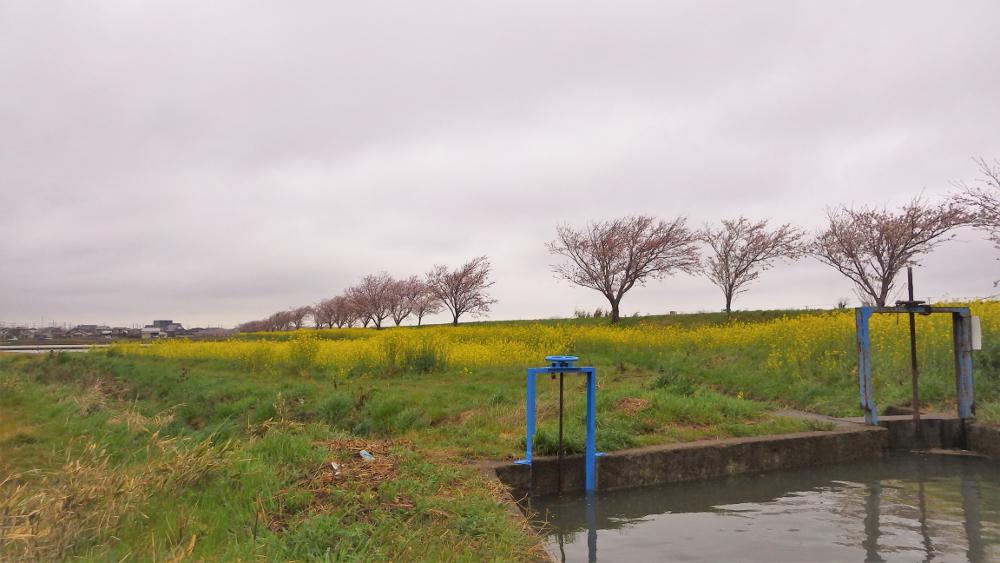 高柳用水路03