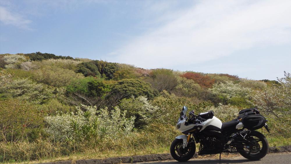 東京湾観音近く山桜に囲まれる