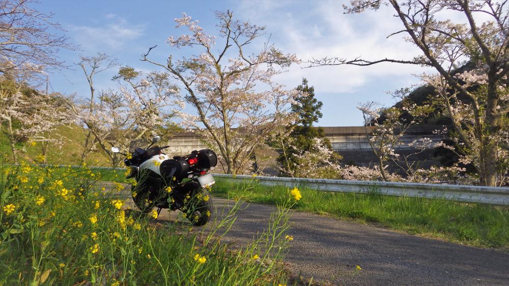 2ダムと桜と菜の花とFAZER8