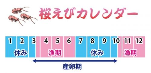 桜えびカレンダー
