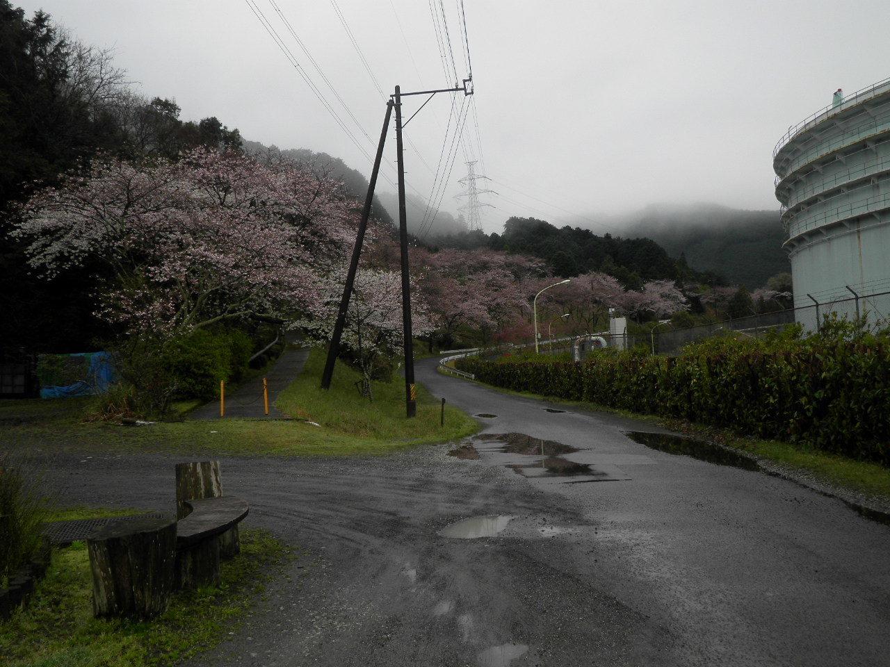 玄具の桜47