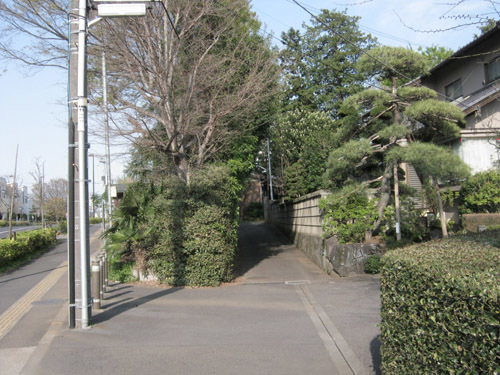 神社と桜1