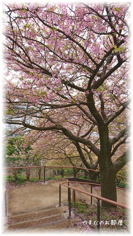 まつだ桜まつり④
