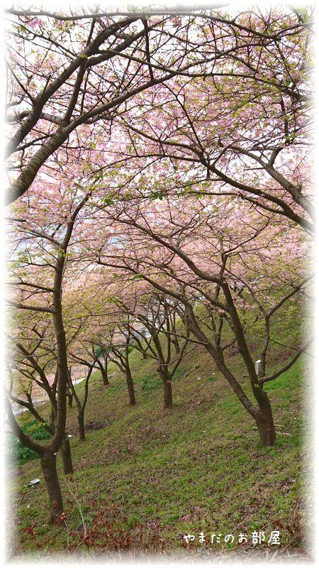 まつだ桜まつり①