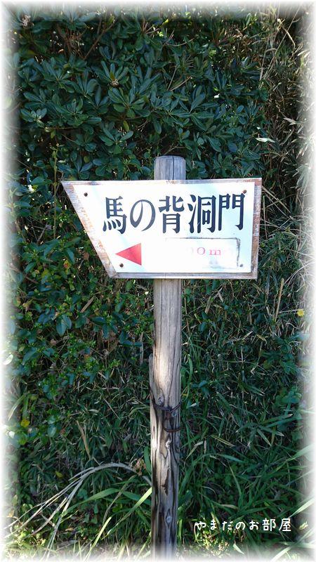 城ヶ島、馬の背洞門①