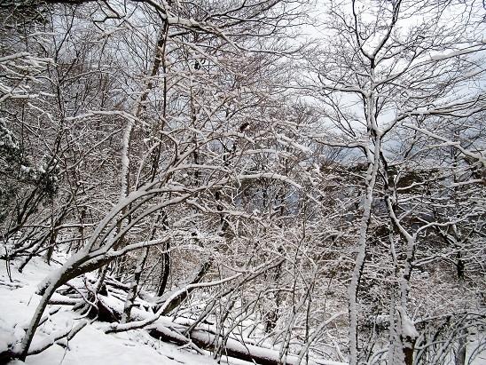 鶴見岳樹林