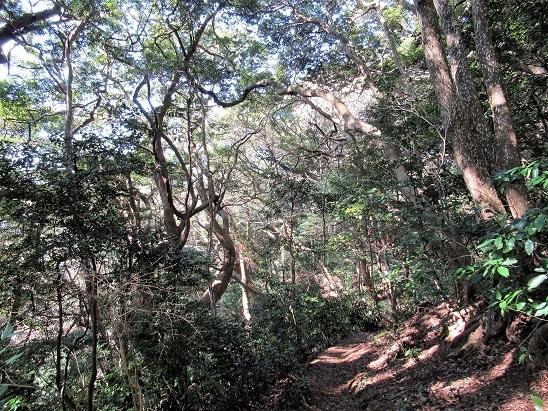 立花山の森