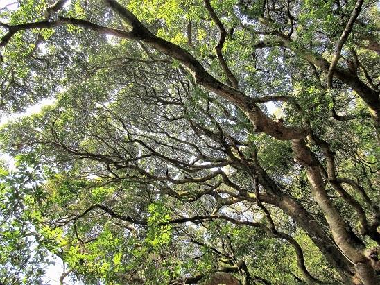 立花山の森2