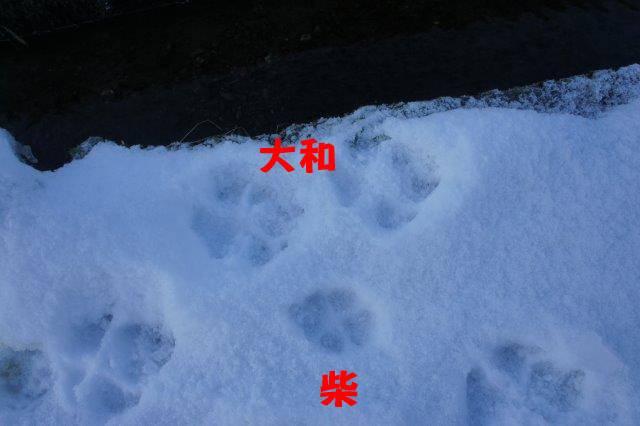 DSC05184.jpg