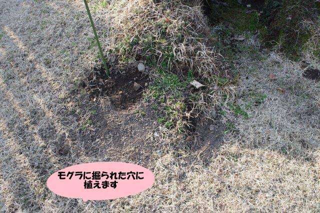 DSC05948_20170416194356b0d.jpg