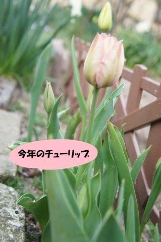 DSC05982_201704171918116bb.jpg
