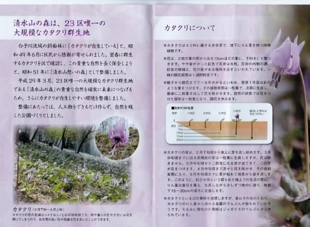 清水山カタクリ (1024x750)