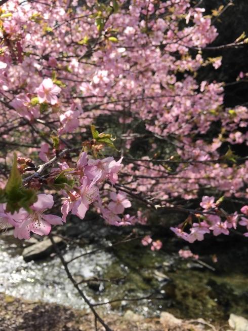 y_blog_photo_037.jpg