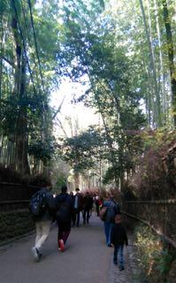 Bamboo path - 1