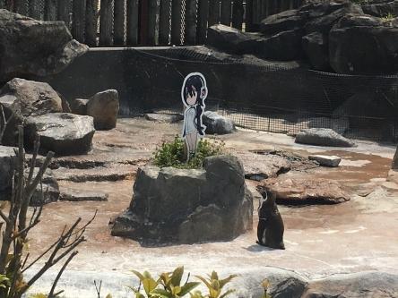 【けものフレンズ】動物園の動物も けもフレパネル に興味深々wwwww見つめたり食べてみたり